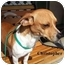 Photo 2 - Jack Russell Terrier Mix Dog for adoption in Slidell, Louisiana - Christopher