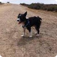 Adopt A Pet :: Oreo - Goleta, CA