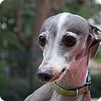 Adopt A Pet :: Joey - OC - Costa Mesa, CA