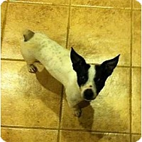 Adopt A Pet :: Bacon Bits - Glen Burnie, MD