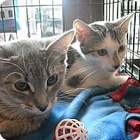 Adopt A Pet :: Future & Faye-FunTastic Pair! - Arlington, VA