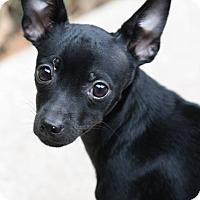 Adopt A Pet :: Jasper - Oak Creek, WI