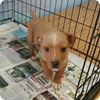 Adopt A Pet :: Lance - Philadelphia, PA