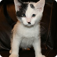 Adopt A Pet :: Patches - Irvine, CA