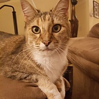 Adopt A Pet :: Angel the Senior Beauty - Oviedo, FL