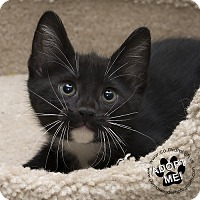 Adopt A Pet :: Zeke - Troy, OH