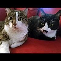 Adopt A Pet :: Polly and Pita - Arlington, VA