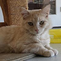 Adopt A Pet :: First Mate - Diamond Springs, CA