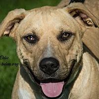 Adopt A Pet :: Odie - Cheyenne, WY