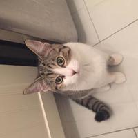 Adopt A Pet :: Zsa Zsa - Athabasca, AB