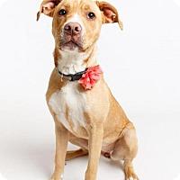 Adopt A Pet :: Sue - Jefferson, LA
