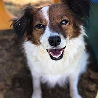 Adopt A Pet :: Zoey - Russellville, KY