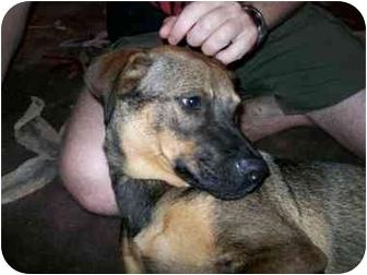 German Shepherd Dog Mix Dog for adoption in Homestead, Florida - Freedom