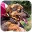Photo 2 - Dachshund/German Shepherd Dog Mix Dog for adoption in Inman, South Carolina - Gracie