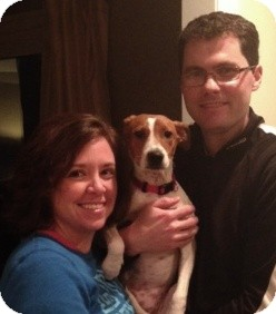 Jack Russell Terrier/Beagle Mix Puppy for adoption in Plain City, Ohio - Lilly (Patty)(Patron)