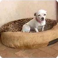 Adopt A Pet :: Minnie - Chimayo, NM