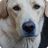 Adopt A Pet :: Dell - Danbury, CT