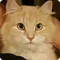 Adopt A Pet :: Ginger - brewerton, NY