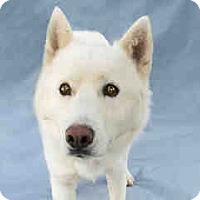 Adopt A Pet :: Buddy - Agoura, CA