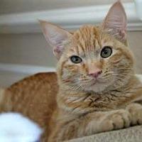 Adopt A Pet :: Rusty - Encinitas, CA
