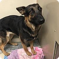 Adopt A Pet :: Greta - Westminster, CA