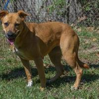 Adopt A Pet :: Brienne - Hopkins, SC