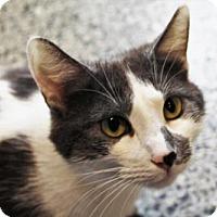 Adopt A Pet :: Naomi Batliner - Denver, CO