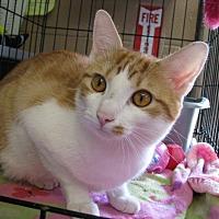 Adopt A Pet :: Buddie - New Kensington, PA