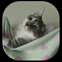 Adopt A Pet :: Blu - Richmond, VA