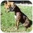 Photo 2 - Boxer Dog for adoption in Brunswick, Georgia - Nina