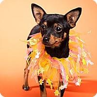 Adopt A Pet :: Cami - Escondido, CA