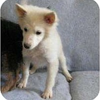 Adopt A Pet :: Ivory - ADOPTION PENDING - Antioch, IL