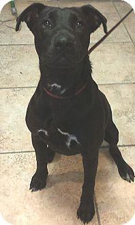 Labrador Retriever Mix Dog for adoption in Kirby, Texas - Rose