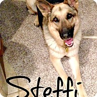 Adopt A Pet :: Steffi - Scottsdale, AZ