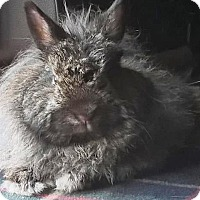 Adopt A Pet :: Gizmo - Hillside, NJ