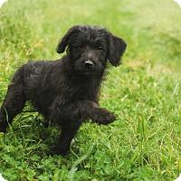 Adopt A Pet :: Daisy May - Auburn, CA