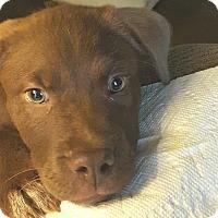 Adopt A Pet :: Maggie Mae - Acworth, GA