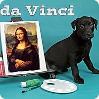 Adopt A Pet :: da Vinci - Joliet, IL