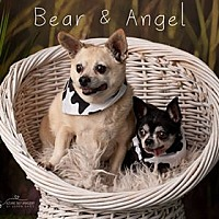 Adopt A Pet :: Angel and Bear! - phoenix, AZ