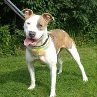 Adopt A Pet :: Shelby - Canastota, NY