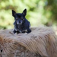 Adopt A Pet :: Yoga - Lubbock, TX