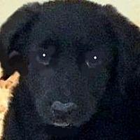 Adopt A Pet :: HOWIE(LOVES CHILDREN - Wakefield, RI