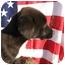 Photo 2 - Border Collie/Labrador Retriever Mix Puppy for adoption in Marion, North Carolina - PANDORA