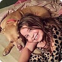 Adopt A Pet :: Precious - Northfield, NJ