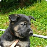 Adopt A Pet :: Calista*ADOPTION PENDING* - Mill Creek, WA