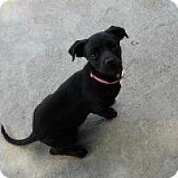 Adopt A Pet :: BOUNCE - Nampa, ID