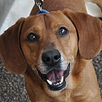 Adopt A Pet :: William - Atlanta, GA