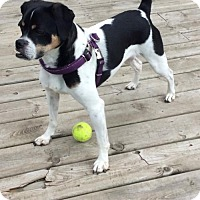 Adopt A Pet :: Oreo 3443 - Toronto, ON
