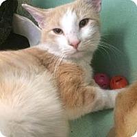 Adopt A Pet :: Lloyd - Philadelphia, PA