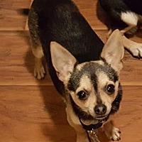 Adopt A Pet :: Tristan - Scottsdale, AZ